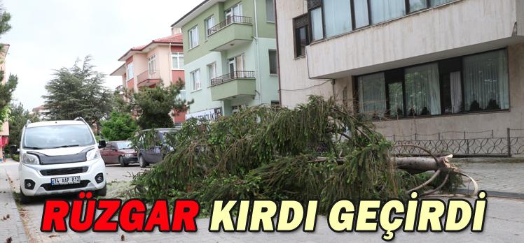 RÜZGAR KIRDI GEÇİRDİ/ AĞAÇLAR FIRTINAYA DAYANAMADI