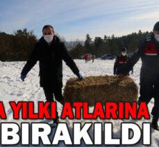 BOLU'DA YILKI ATLARINA YEM BIRAKILDI